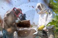 REPORTAGE - Gazastreifen: Bienenzüchter im Flüchtlingslager von Nusseirat