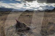 REPORTAGE - Ferndestination Patagonien
