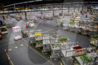 REPORTAGE - Blumen aus Holland: Royal FloraHolland in Aalsmeer