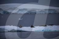 REPORTAGE - Das Leben in der Antarktis