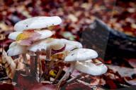 REPORTAGE - Herbstzeit ist Pilzzeit