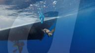 NEWS - Terracina: Küstenwache lassen Meeresschildkröten frei
