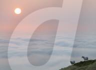 FEATURE - Schafe über den Wolken: Sonnenaufgang mit Tiefnebel in der Hügellandschaft in Shropshire
