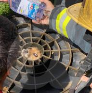 FEATURE - Welpe gerettet, nachdem er mit dem Kopf in Gullideckel stecken geblieben ist