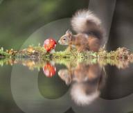 FEATURE - Allerliebst: Ein Eichhörnchen bestaunt einen Pilz am Gartenteich
