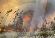 NEWS - Waldbrände in der russischen Region Woronesch