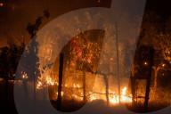 NEWS - Napa Valley: Schwere Waldbrände zerstören Weinberge