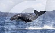 FEATURE - Kommt ein Babywal geflogen