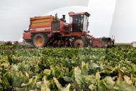 REPORTAGE - Anbau von Zuckerrüben in Laon , Frankreich