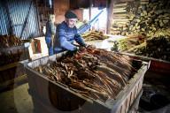 REPORTAGE - Die letzten Brauntabakproduzenten in Lot et Garonne in Calonges