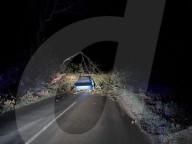 NEWS - Beinahe tödlich: Der Fahrer eines Kleinwagens überlebt wie durch ein Wunder die Kollision mit einem umfallenden Baum