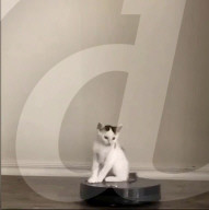 FEATURE - Fast wie Autoscooter: Hauskatze Boogie fährt gern mit dem Saugroboter durch die Wohnung