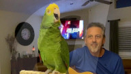FEATURE - Bon Jovi und Beatles im Repertoire: Musikalischer Papagei begleitet das Gitarrenspiel seines Halters