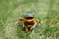 FEATURE - Ein Laubfrosch scheint zu lächeln, nachdem er mit Wasser besprüht wurde