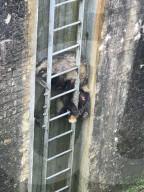 FEATURE - Dachs-Paar wird aus misslicher Lage gerettet