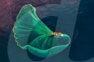 FEATURE - Ein riesiges Fischernetz ähnelt einer Riesenqualle