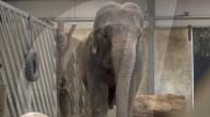 FEATURE - Einsamer Elefant hat seit fast 20 Jahren keinen anderen Artgenossen mehr gesehen