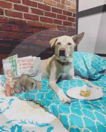 FEATURE - Alles für den besten Freund des Menschen: Das Noble Dog Hotel in Greenville