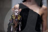 FEATURE - Wau Couture: Modenschau für Hund und Frauchen im Rahmen der New York Fashion Week