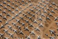NEWS - Luftfahrtkrise: Flugzeuge im Milliardenwert sind aufgrund von COVID-19 Reisebeschränkungen geparkt und stillgelegt