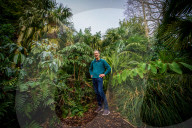 FEATURE - Welcome to the Jungle: Simon Olpin aus Sheffield hat seinen Reihenhausgarten mit Palmen zum Dschungel umgestaltet