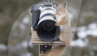 FEATURE -  Optisch alles OK: Ein Eichhörnchin posiert neben einem Fotoapparat