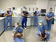 FEATURE - Vierbeiner wieder wohlauf: Tierärzte operieren am selben Tag fünf Welpen am Herz