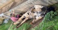 FEATURE - Pferd liegt rücklings in der Grube: Feuerwehr rettet das Tier
