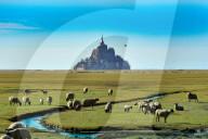 FEATURE - Schafe grasen vor Mont Saint Michel in der Normandie
