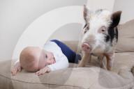FEATURE - Baby Teddy hat ein echtes Schwein als besten Kumpel