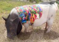 FEATURE - Schweine-Couture: Doreen Burke verkauft Kleidung für Hausschweine