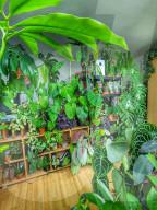 FEATURE - Pflanzenliebende Carla Hora verwandelt ihre Londoner Wohnung in einen Stadtdschungel