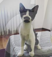 FEATURE - Katze Chalana trägt einen Schnauz