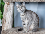 FEATURE - ie beiden blinden Katzen George und Juno geniessen mit ihrem sehenden Artgenossen Klaus ein luxuriöses Leben