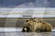 FEATURE - Bärenmutter posiert mit ihren Jungen für ein Familienbild