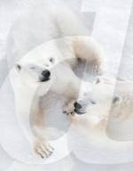 FEATURE -  Im kältesten Zoo der Welt: Eisbärmama Kolymana mit ihrem Nachwuchs im sibirischen  Yakutsk
