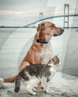 FEATURE - Unzertrennlich: Katze Mini und Hund Cooper gehen sogar zusammen spazieren