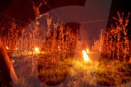 NEWS -  Frostkerzen im Obstbau: Mit Feuerschein gegen die Kälte in Belgien