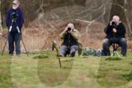 FEATURE - Zurück aus Afrika: Kuckuck Colin posiert für Tierfotografen an seinem Stammplatz in Surrey