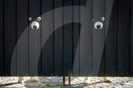 FEATURE - Sieht aus wie Mickey Mouse: Die vier Huskies von Andy Grannell schauen durch spezielle Gucklöcher im Gartentor