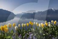 FEATURE - Frühling am Genfersee in Montreux