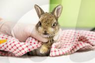 FEATURE - Zwei Kaninchenwaisen werden im Mallydams Wood Wildlife Centre in Hastings aufgepäppelt