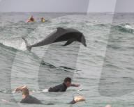 FEATURE -  Delfin springt in die Wellen neben überraschten Surfern in Sydney