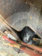 FEATURE - Erica Urbanovitch und ihr Vater befreien ein eingeklemmtes Kätzchen aus einm Häcklser