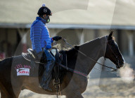 NEWS - Pferderennen: Vorbereitungen fürs Kentucky Derby vom Sonntag
