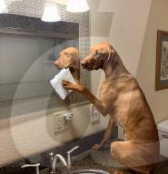 FEATURE - Ehemalige Hundetrainerin überlässt ihren drei Hunde die Hausarbeit