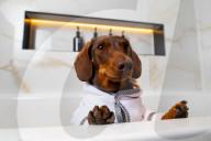 FEATURE - Nobu Hotel in London kleidet Hunde der Gäste in feinste Plüschmäntel