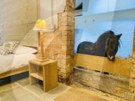 FEATURE - Skurriles Airbnb: Übernachtung mit einem Miniaturpferd namens Basil inbegriffen