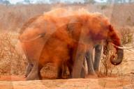 FEATURE -  Ein Elefant verschwindet hinter einer Wolke aus orangefarbenem Staub