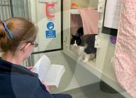 FEATURE - Tierpsychologie: Tierpfleger lesen Katzen Geschichten vor um sie wieder an Menschen zu gewöhnen